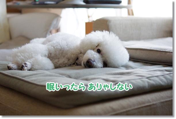 眠いったら