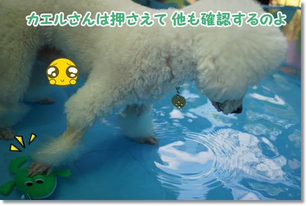 水遊びは楽しい♪5