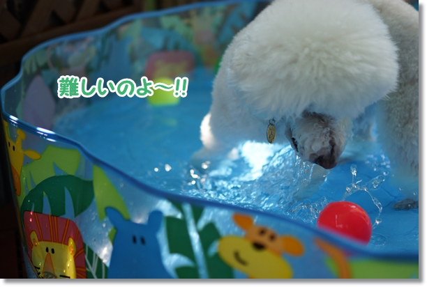 水遊びは楽しい♪8