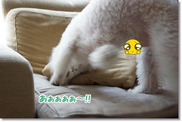 ちゃっぷん1