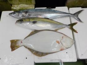 5鮮魚セット20161031