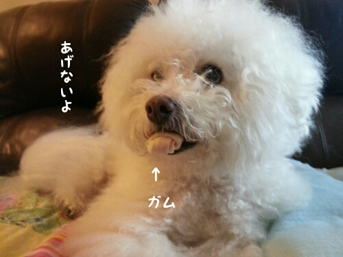 fc2_2016-10-25_09-43-44-141.jpg