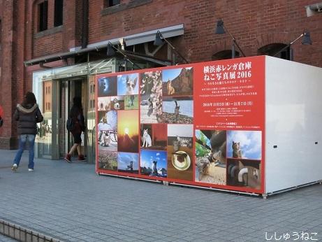 赤レンガ倉庫猫写真展