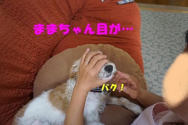 DSC00479.jpg