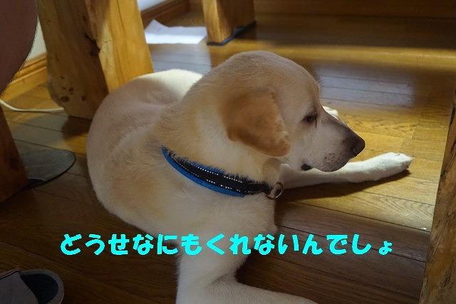 DSC09551.jpg