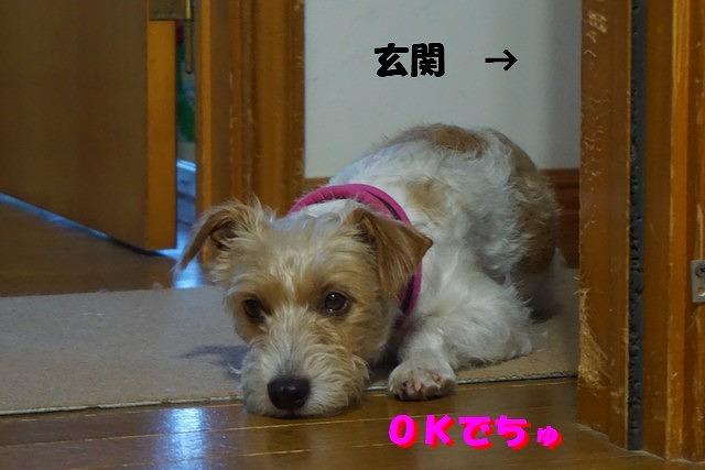 DSC09595.jpg