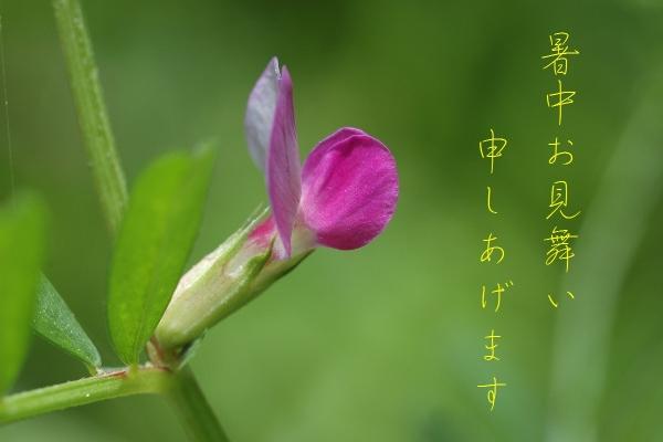IMG_1531.jpg
