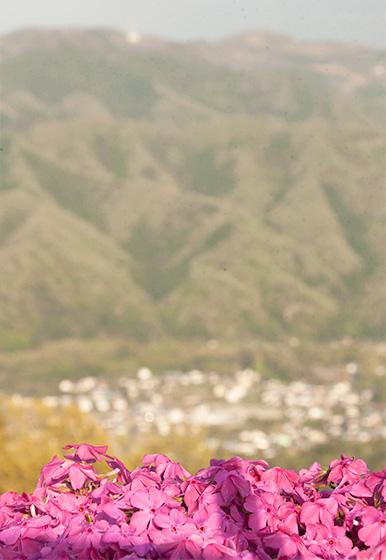 芝桜と山_2562
