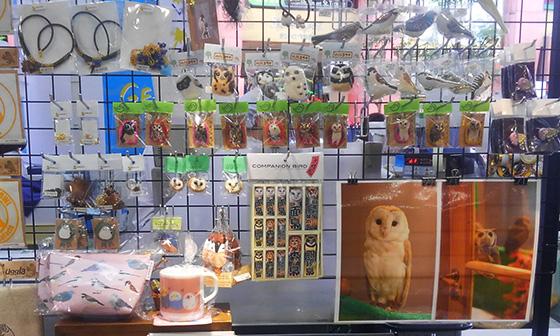 店頭野鳥KIMG1301