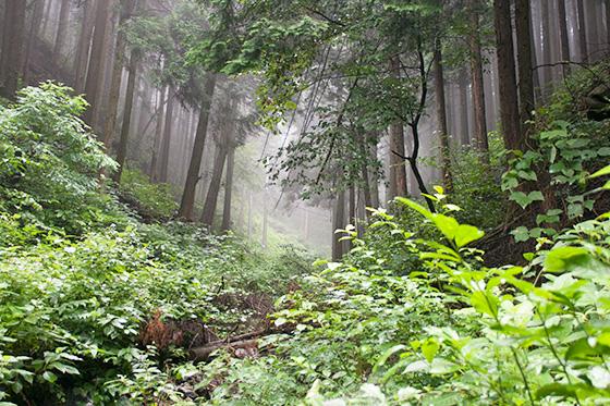 林もや_7924