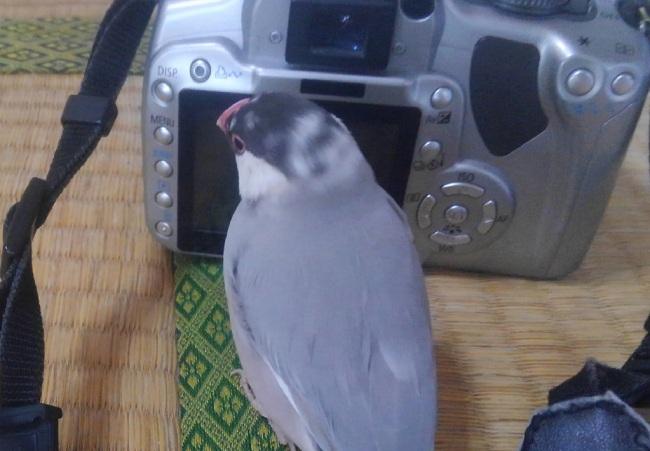 きなカメラ