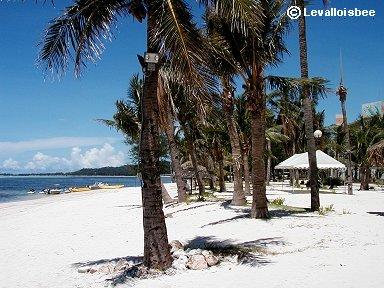 サンゴのかけらで出来たサイパンの砂浜は真っ白downsize