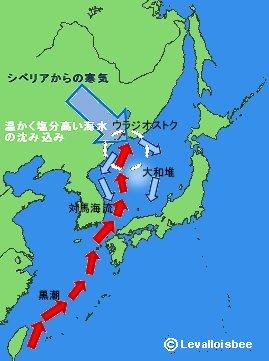 日本海のミニ海水循環