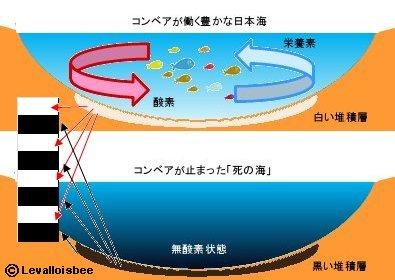 日本海の白黒縞模様