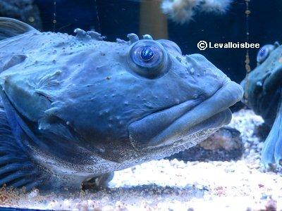 タラコ唇の極北の魚は動きませんdownsize