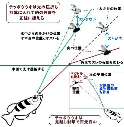 光の屈折を計算し見越し射撃するテッポウウオREV2