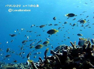 6月珊瑚礁はベビーがいっぱいREVdownsize