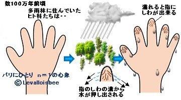 森に雨が降ると指にしわが出来る