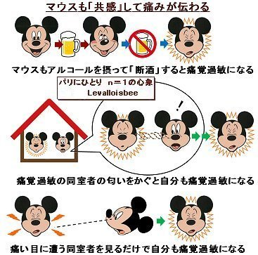 マウスも親しい者の痛みが伝わる共感がある
