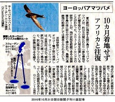 アマツバメ新聞記事downsize
