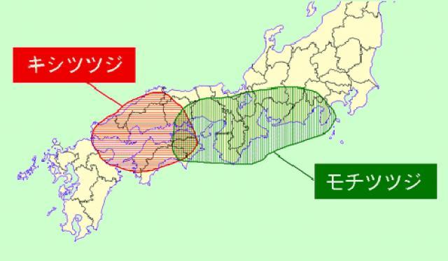 モチツツジとキシツツジの分布域