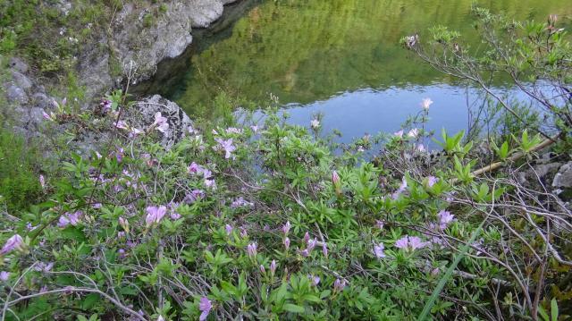 生育環境は川岸の岩場