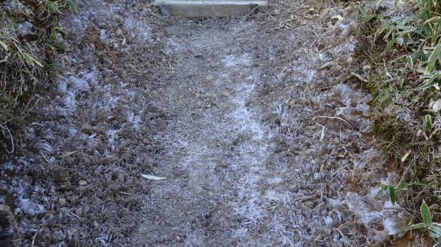 登山道は霜柱で真っ白