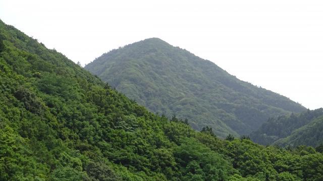 むこうの三角山の麓にもシャクナゲが自生