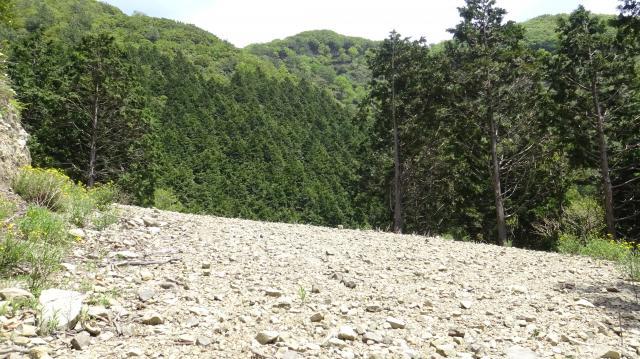 林道の向こうの尾根がシャクナゲ自生地