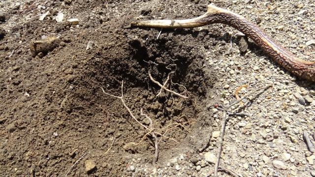 石器時代には貴重な掘り棒
