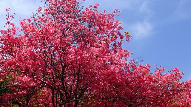 群落の北側も見事な咲きっぷり