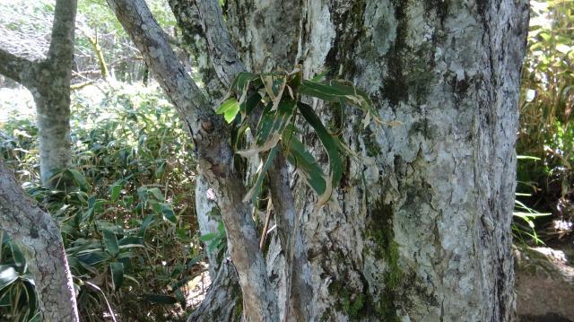 ミズナラの大木の根元