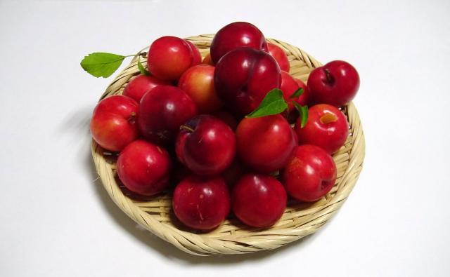 スモモ(大石早生)の収穫