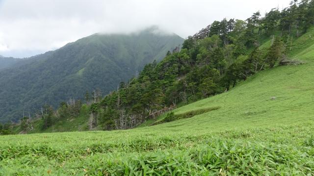途中の山地放牧できそうな笹原