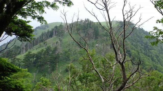 ハクサンシャクナゲ自生地付近から剣山山頂を見た