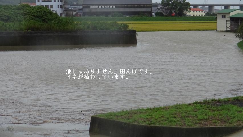 池じゃありません