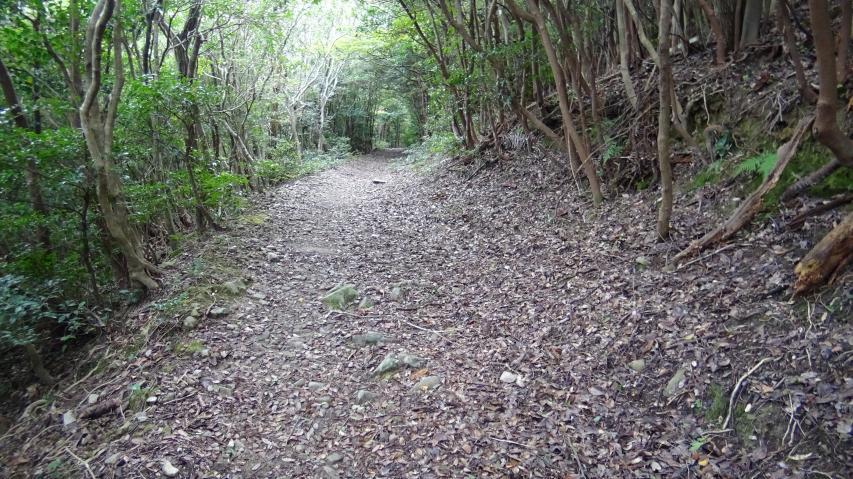 落ち葉の絨毯を歩きます
