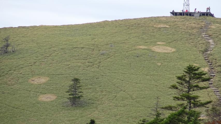 笹原に不思議な円環