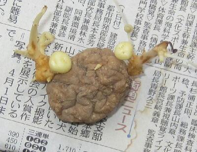 ジャガイモ (2)