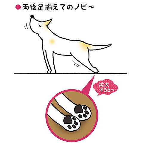 nobi_2.jpg