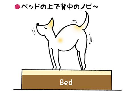 nobi_4_1.jpg