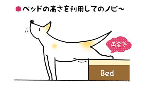 nobi_4_2.jpg
