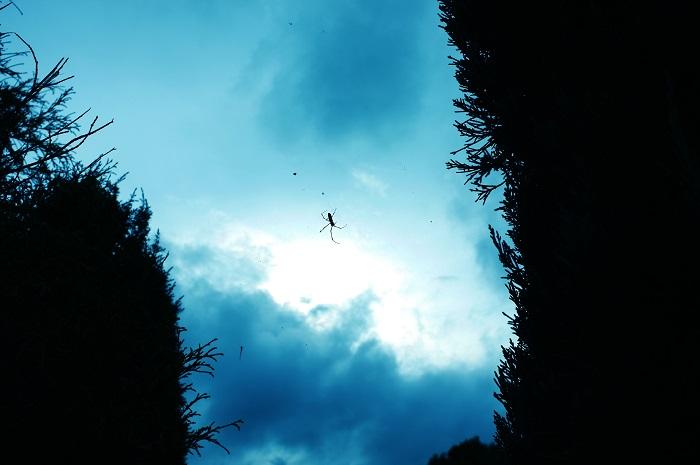フリー画像森の合い間の空