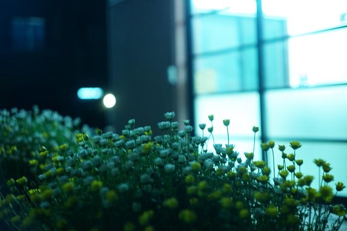 フリー画像夜の草花