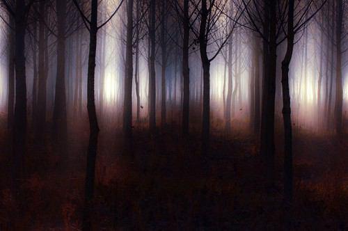 フリー画像霞む木々