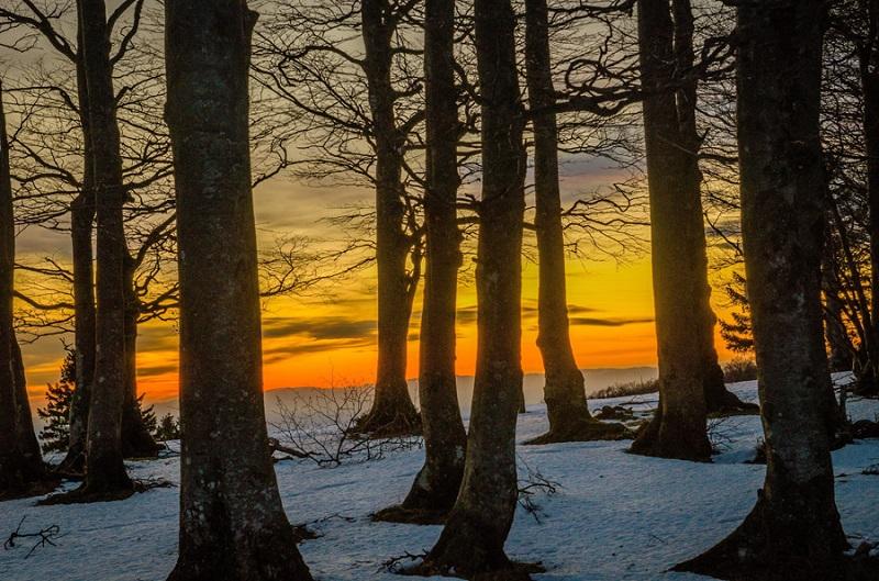フリー画像夕焼けと木々