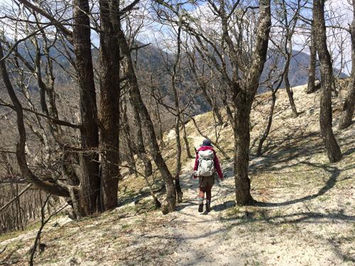 日向山ハイキング1040.jpg