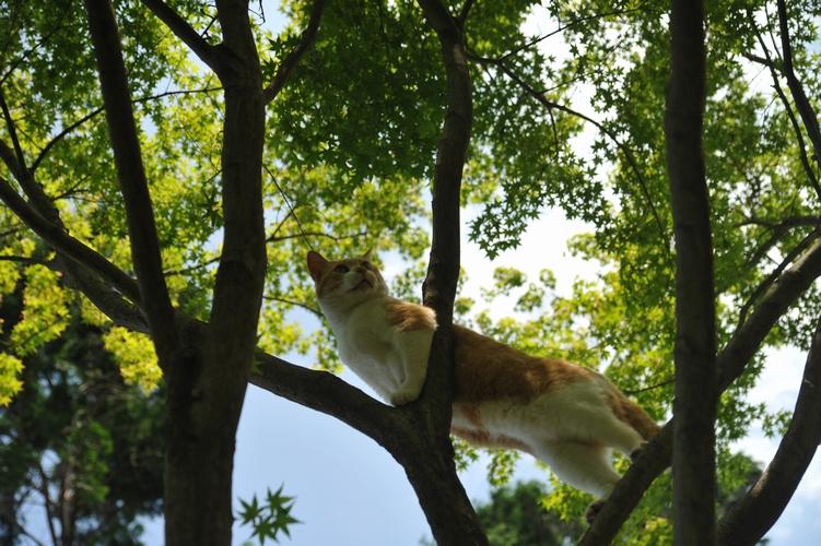 新緑と樹猫
