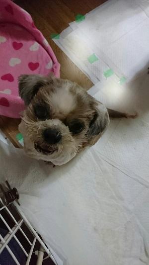 koyuki1013.jpg