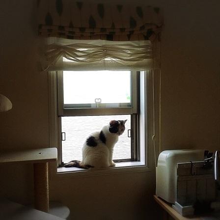 窓辺のまめ